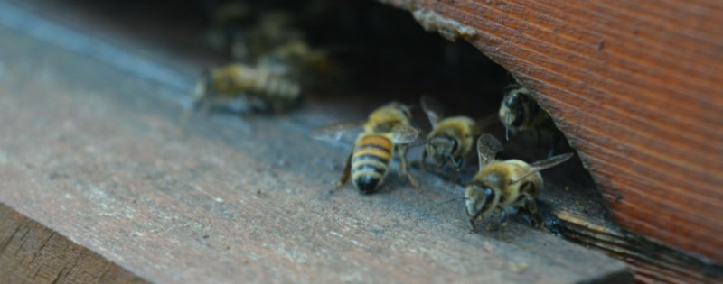 miele zeffiro, propoli, miele campania, miele biologico, polline, api, miele italiano