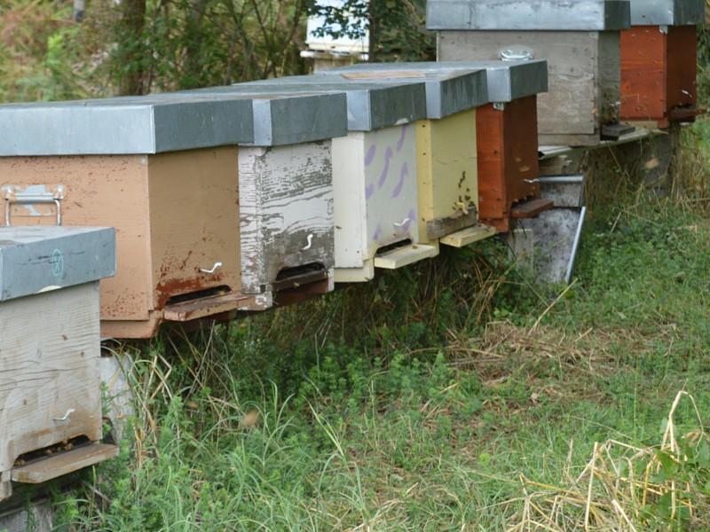 arnie, polline, miele, miele italiano, apicoltura zeffiro, propoli, pappa reale, polline, nocciomiele